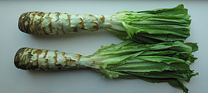can rabbits eat celtuce