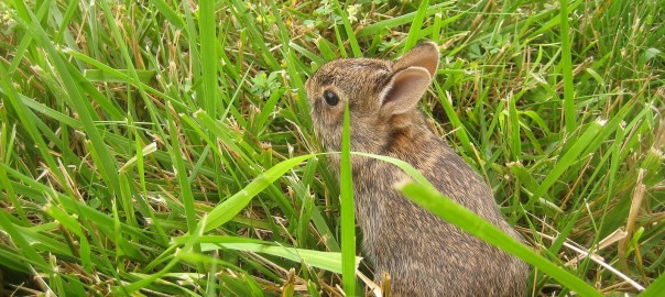 simple facts about rabbits