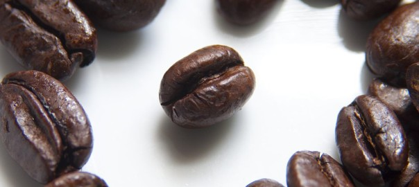 can rabbits eat coffee beans