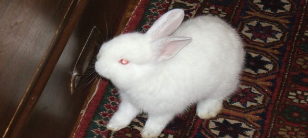 how can i fatten my rabbit up